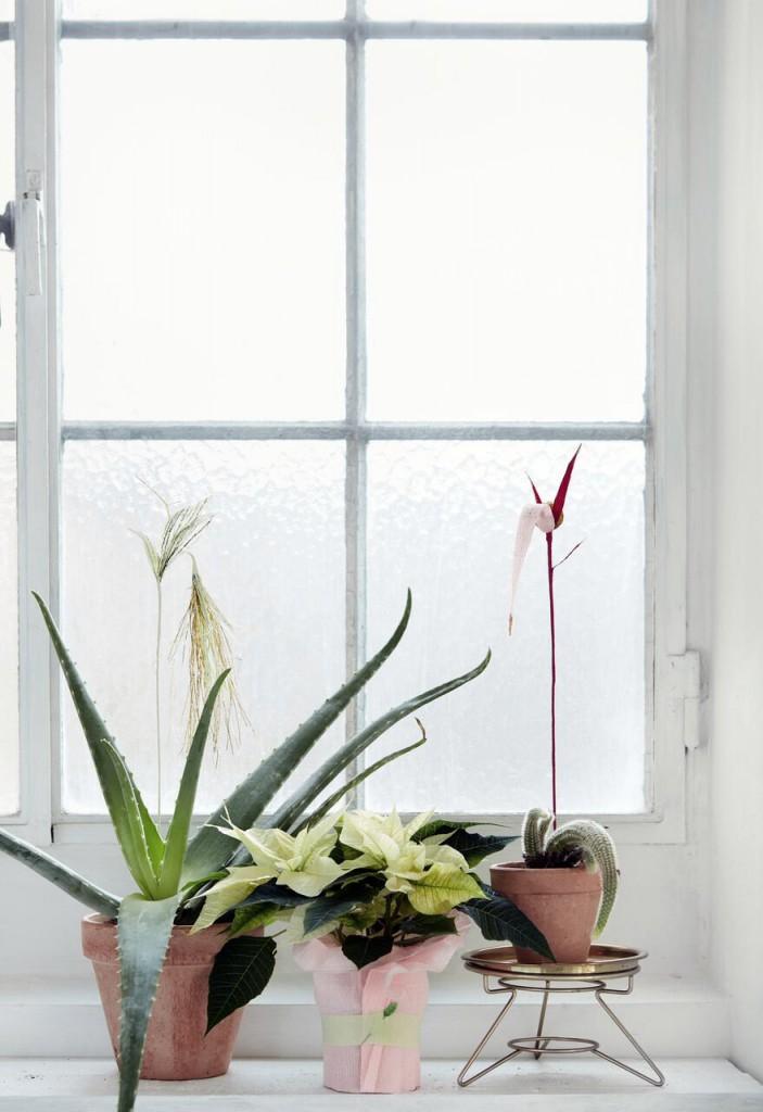 Poinsettia - Floradania Marketing / heidihallingstad.com