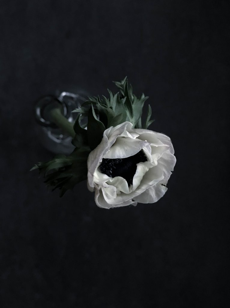 Fresh flowers // heidihallingstad.com